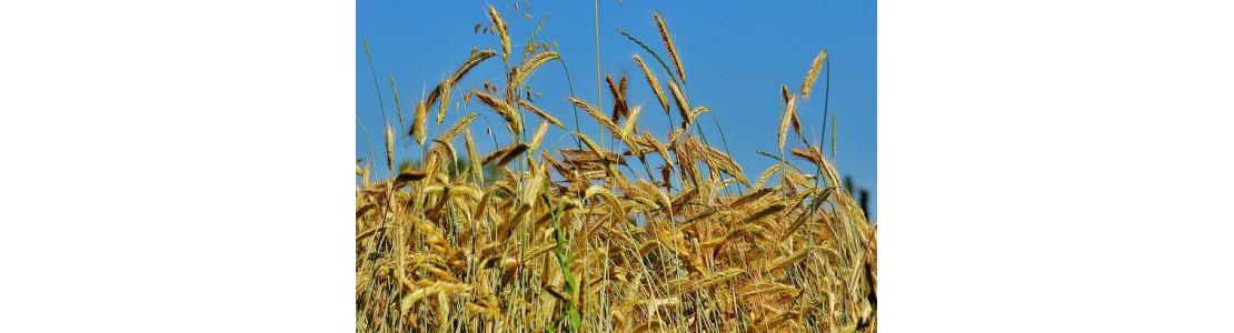 1000x1000-1473752158-grain-1503394-640